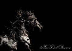 The Merens Horse photographed by Tina Thuell, is a rare french breed that has run semi wild high in the Pyraneese Mountains for centuries.