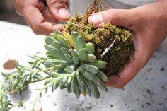 DIY Garden: Kokedama Hanging Plant, Step 3b