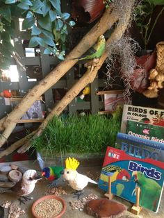 Birds play provocation at Puzzles Family Day Care ≈≈ what an interesting & creative Kinder! Their motto : Sharing simple, sustainable environments to keep the passion alive for both children and educators.