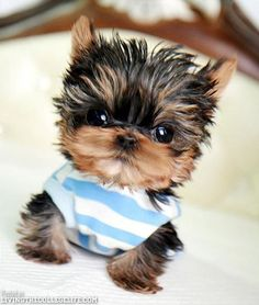 OMG Cutest Gallery of Kittens and Puppies (26 Photos)