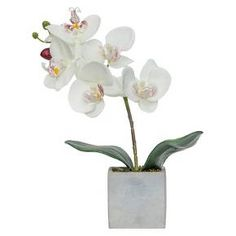 This white orchid arrangement is a great addition to your home and will bring in the new season! The orchid accents make this arrangement stand out with delicate beauty. It's stylish look will not only have you buying one for yourself, but one to keep in your back pocket for your next gift!