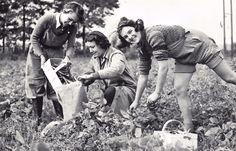 FYI: #retweet #postcard Nostalgia Postcard Runner Bean Harvest, 1949, Women's Land Army #CN17 http://stores.ebay.co.uk/stampsvintage