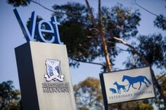 Melbourne DVM course overview - The Melbourne Veterinary School is one of OzTREKK students' favourites! If you're considering applying to Australian veterinary schools, here is a bit about Melbourne to get you started!