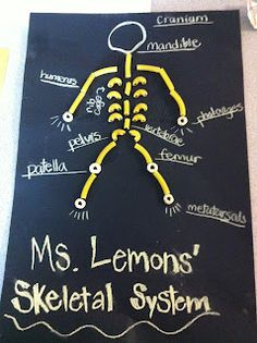 The skeletal system with cheerios, pasta and chalk- Now What, Ms. Lemons?