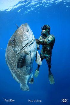 Let's go spear fishing giant dog snapper.