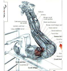 """ANTRENAMENT FETE – CRISTIAN DAVID """"YOUR PERSONAL TRAINER"""" Biceps, Musculoskeletal System, Human Body, Personal Trainer, Trainers, Exercises, David, Sport, Peroneus Longus"""