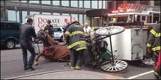 Ban Horse Carriages in NYC - now that we have a mayor who wants to ban this industry, sign and let him know we're serious!