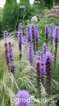 Wymarzony sielankowy ogród..... - strona 568 - Forum ogrodnicze - Ogrodowisko Plants, Plant, Planets