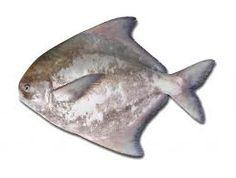 Chinese Pomfret Fish - เต๋าเต้ย