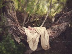 love the serene lcoation for baby :-) By Wild Flower Photography... how she plays with light and depth of field is lovely.