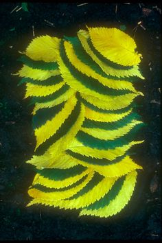 andy goldsworthy leaves - Google Search