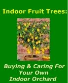 Caring for your indoor orchard