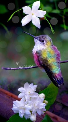 Most current No Cost Exotic Flowers hummingbirds Style Regional flowers along with plants can be a terrific addition to virtually any workplace or kitchen table, ne Cute Birds, Pretty Birds, Exotic Birds, Colorful Birds, Exotic Flowers, Beautiful Creatures, Animals Beautiful, Funny Bird, Animals And Pets
