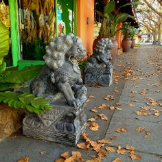 Fu Dogs doing their thing.  #fudogs #fengshui #guardians #lions #china #protection #statuary #garden #sanjose