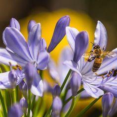 Vedeli ste o tom, že ak umrie posledná včela,ľudstvu zostávajú 4 roky života? #einstein #bee #honey #apitherapy