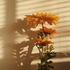 ❂everyone нaѕ тнeir yellow painт❂ aesthetic ~yellow~ yellow flowers flowers sunflower nehrd Orange Aesthetic, Flower Aesthetic, Aesthetic Vintage, Sun Aesthetic, Belle Aesthetic, Yellow Aesthetic Pastel, Aesthetic Beauty, Nature Architecture, Mellow Yellow