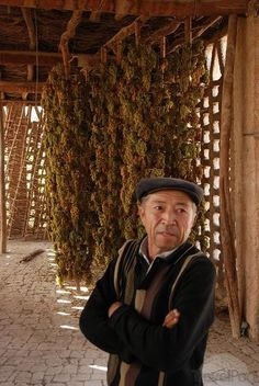 The Grape Grower in His Grape-Drying Shed by Travelpod Member Scottk