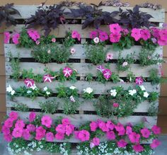 Pallet garden with beautiful purple flowers