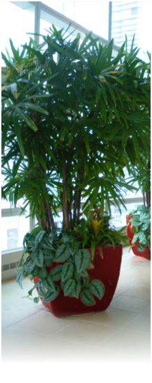 Office Interior Scape and Plant Rental