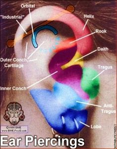 A guide to the different types of ear piercings multiple earrings ear piercing placement diagram i have matching lobes done and a cartilage i really want my tragus done ccuart Image collections