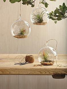 glass garden globe + plant