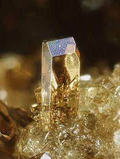 Phlogopite, KMg3(AlSi3O10)(OH)2, Monte Somma, Somma-Vesuvius Complex, Naples Province, Campania, Italy. Prismatic crystal elongated, up to 1,1 mm long. Copyright © Enrico Bonacina