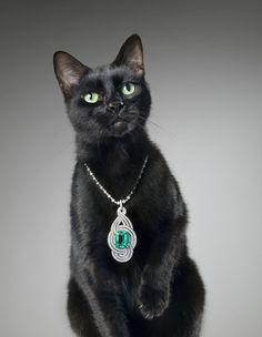 Fancy Black Beauty. Cat  Emerald necklace