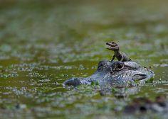 32 reptiles qui vont vous séduire…