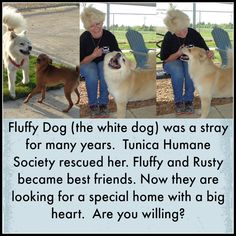 Tunica Humane Society is a no kill shelter.  Sandy is a dog angel.  She climbs under houses and wades in mud to rescue dogs.  Click on pin to read more and support them.