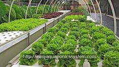 aquaponics materials - aquaponics filter diy.aquaponics farming system 2647296964