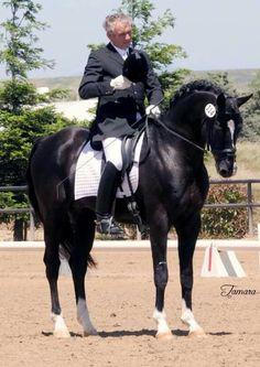 """Devon Heir"" Hanoverian Stallion. I love him, would love to see him in person."