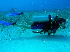 Can't catch me but you can catch more at http://scuba.megainfohouse.com