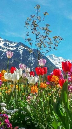 Science Discover Spring tulips in the mountains Beautiful Nature Pictures Amazing Nature Nature Photos Pretty Pictures Beautiful Landscapes Beautiful World Spring Flowers Wild Flowers Spring Wildflowers Beautiful Nature Pictures, Amazing Nature, Nature Photos, Pretty Pictures, Beautiful Landscapes, Beautiful Gardens, Nature Nature, Amazing Flowers, Beautiful Flowers