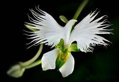 Sehr schöne Orchidee, die eine Raubblume ist