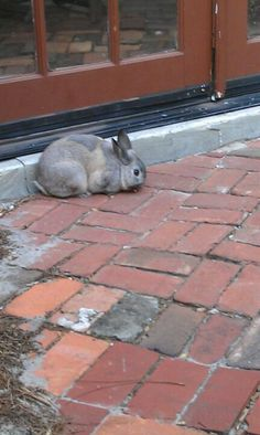 There's a bunny that lives here...oh and great coffee and environment.