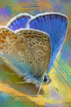 Bird Art / Butterfly Art - printed on STRETCHED CANVAS & embellished with clear matt texture to enhance the original digital brush strokes. DIGITAL BIRD ART Dragonfly Art, Butterfly Art, Common Blue Butterfly, Wall Art Prints, Fine Art Prints, Photo To Art, Art Prints Online, Bird Artwork, Photo Canvas