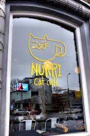 Cat cafe, Tallinn, Estonia