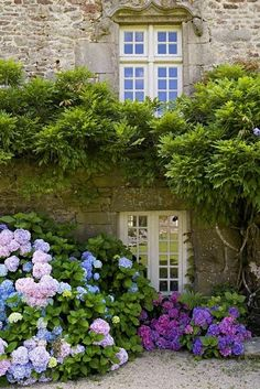 English Country garden hydrangeas