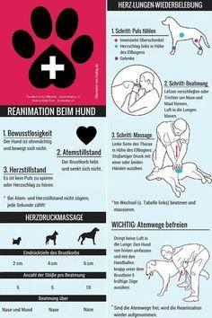 Reanimation beim Hund