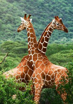Destination for spotting the wild wild! #wildlife #travel #world