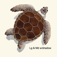 Loggerhead Turtle Brown w/shadow