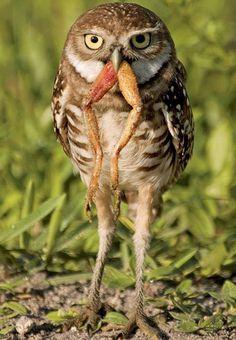 Poor frog :(  Lucky Owl :)