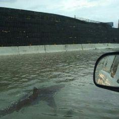 Squali in città con l'uragano, ma è tutto falso