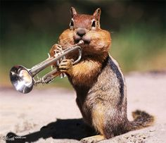 jazz trumpet - Google Search