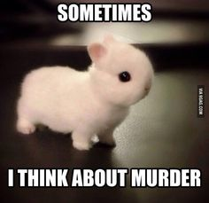 Seriously this is me. Everyone sees me as a baby bunny, but my friends will tell me I'm a psycho. I'm not a psychopath. I'm a high-functioning sociopath. Do your research.