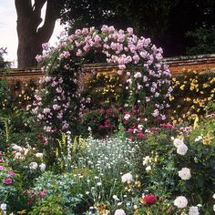 Romantic rose pergola covered with pink climber in full bloom. -Mottisfont Abbey Rose Gardens, Hampshire, UK