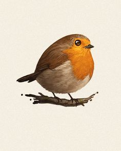 pictures of robins birds & birds robin ; pictures of robins birds ; quotes about robins birds ; food for robins birds ; Robin Vogel, Robin Bird Tattoos, Robin Tattoo, Tattoo Bird, Fat Bird, Kunst Tattoos, Bird Illustration, Bird Drawings, Little Birds