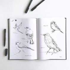An overview of all the inkylines drawings and sketches. Flower Outline, Drawing Sketches, Drawings, Painting & Drawing, Flora, How To Draw Hands, Artsy, Birds, Ink