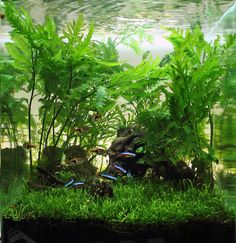 Nano  Aquascape with Freshwater Fish Tetras