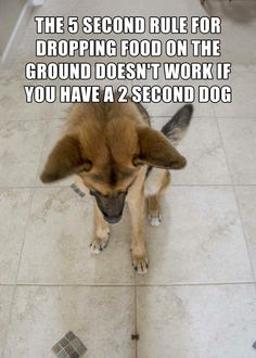 Daily Afternoon Ridiculous Funny Picdump 12 of The Day Pics) - RidiculousPics Funny Animal Pictures, Dog Pictures, Funny Photos, Funny Animals, Cute Animals, Animal Pics, Baby Animals, I Love Dogs, Cute Dogs